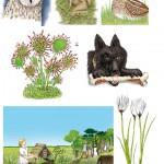 """Anja Weiss, Illustrationen aus meinem Buch """"Das Schloss im Moor"""