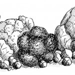 Illustration Kohl